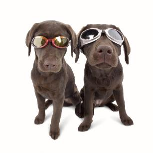 kutya szemüveg
