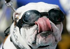 szemüveg kutyáknak