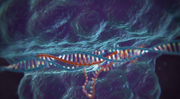 DNS vágó enzim