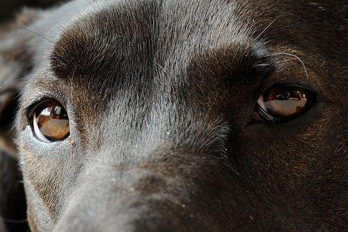 Kutyák látása