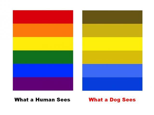 Kutyák színlátása